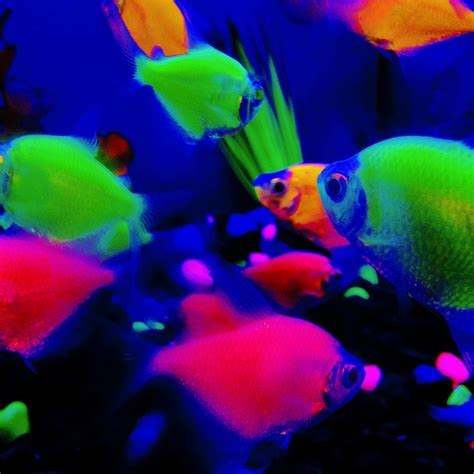 Fish Glow In The glow fish flickr photo