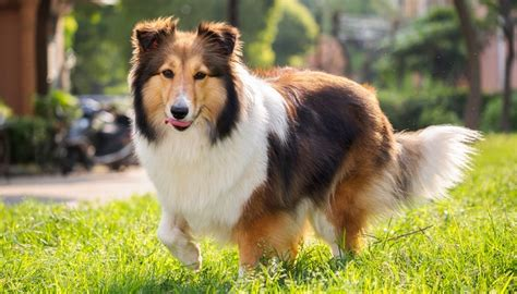 healthiest breeds 30 healthiest breeds that live the