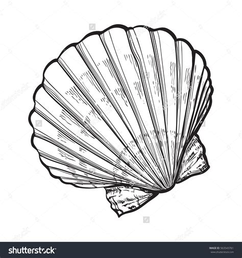 scallop sea shell sketch style vector illustration