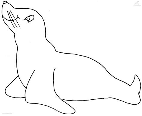 sea lion coloring pages printable sealion coloring page