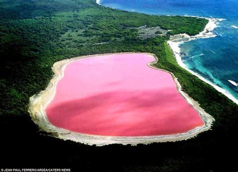 pink lake australia the pink lake west australia