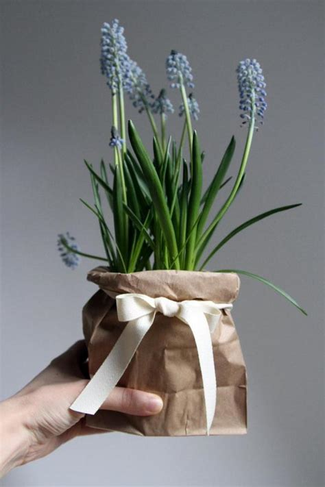 Garden In A Bag Gives The Gift Of Fresh Herbs by Diy Gift Plant Projects The Garden Glove