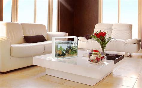 arredare un acquario un acquario di design per arredare casa animali pucciosi