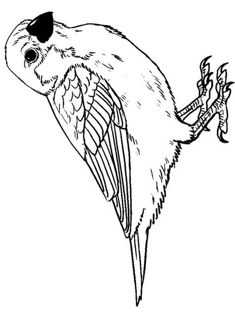 coloring page of house sparrow english sparrow pages coloring pages