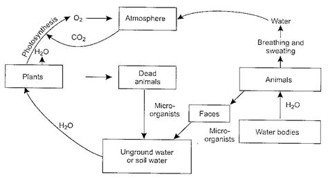 flowchart of water cycle what is hydrological cycle owlgen