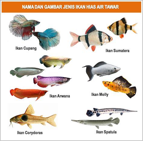 5 Makanan Ikan Hias gambar foto jenis macam nama ikan hias air tawar