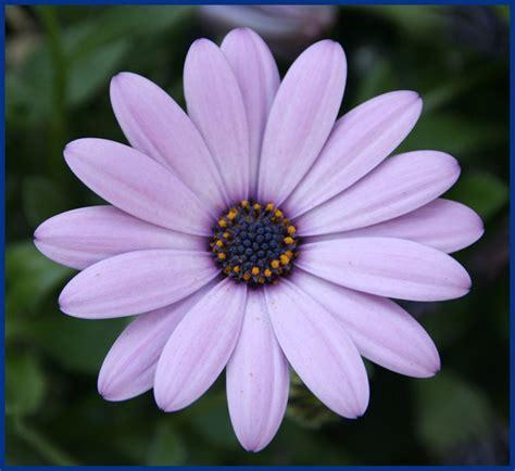 imagenes de uñas flores imagem de flor imagens de imagem de flor