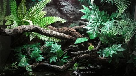 FIRE BELLIED TOAD HABITAT | Flickr - Photo Sharing!