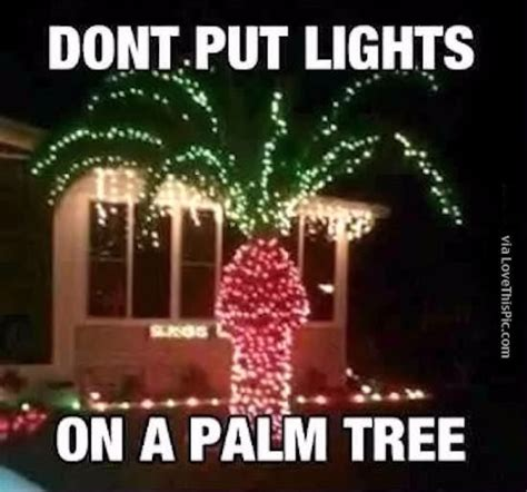 why you should not put christmas lights on a palm tree