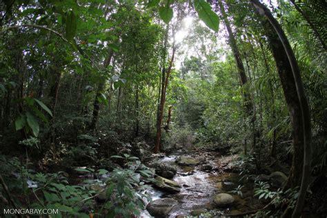 film petualangan di hutan amazon beginilah 8 foto hutan indonesia yang asri dan eksotis