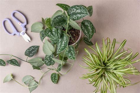 propagate plants  rooting stem cuttings