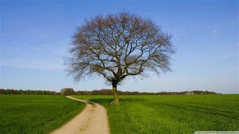 lone tree wallpaper 846399
