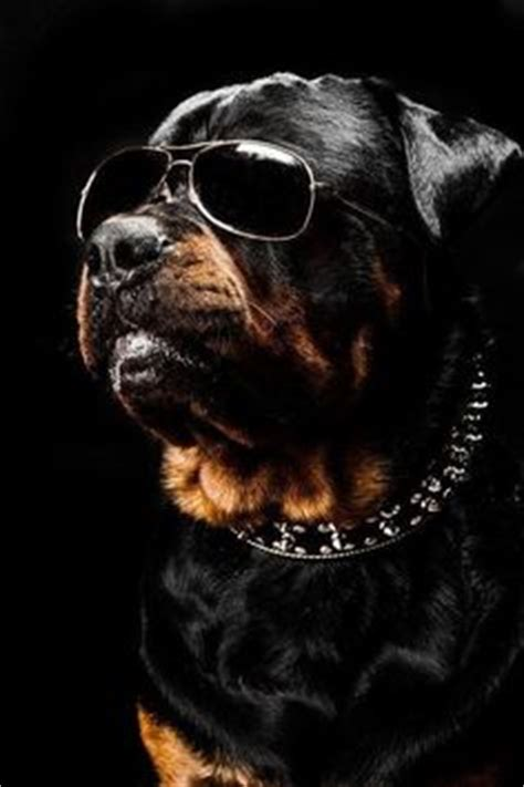 scary names for rottweilers rottweilers on dogs scary and pet memorials