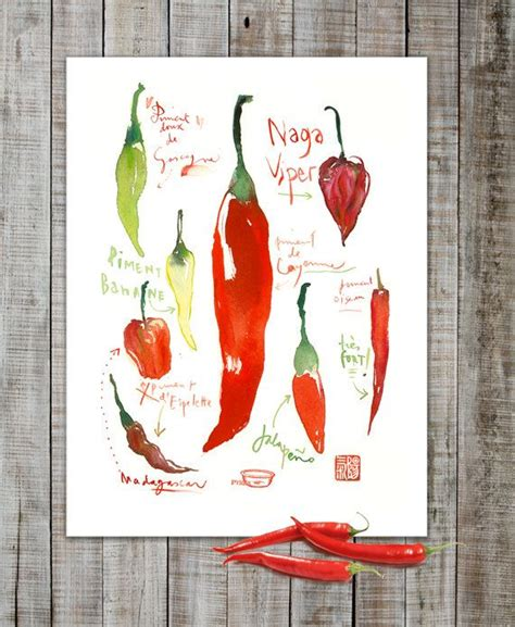 chili pepper kitchen curtains 17 best images about vegetable illustration on pinterest