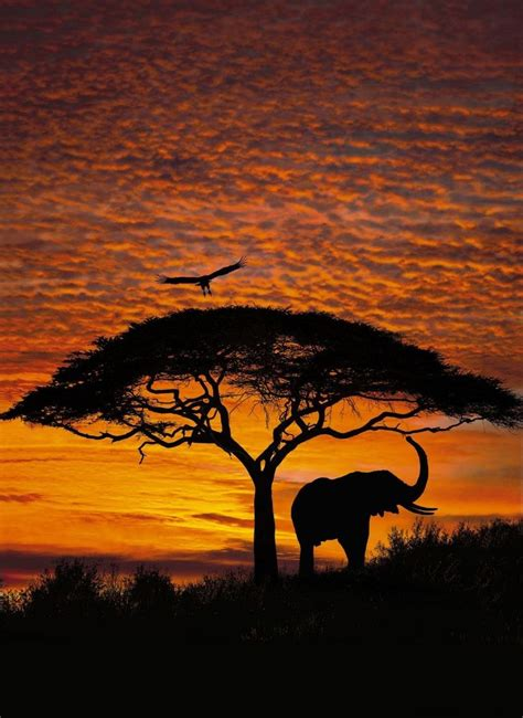 wallpaper for walls south africa african sunset photo wallpaper wall mural elephant big