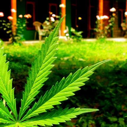 legalized cannabis spikes the california real estate market will legal marijuana give home prices a new high reese