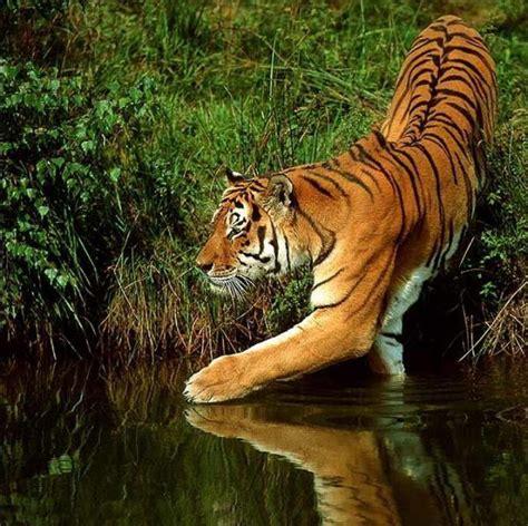imagenes bellas naturaleza las fotos hermosas de la naturaleza 22 fotos p 225 gina 1