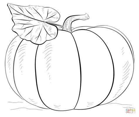 free printable pumpkin coloring pages large printable pumpkin coloring page coloring pages