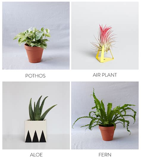best plants the best plants to bring life to your bathroom