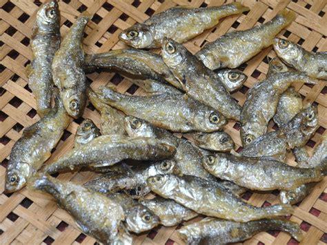 Peluang Usaha Budidaya Ikan Kembung peluang usaha budidaya ikan bilis dan analisa usahanya agrowindo