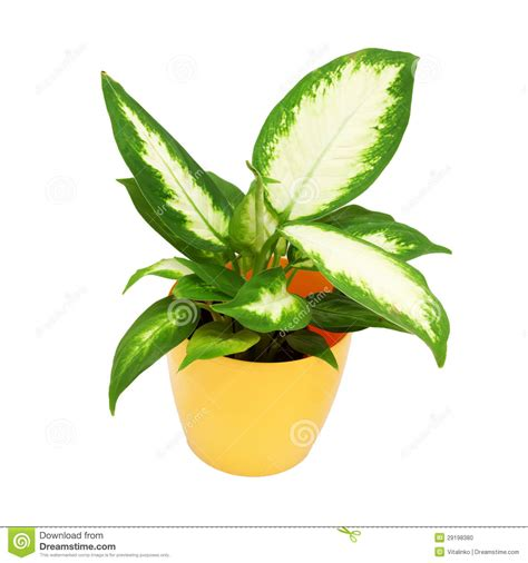 house plant house plant clip art wallpapers gallery