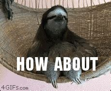 Pervy Sloth Meme - sloth no gif find share on giphy