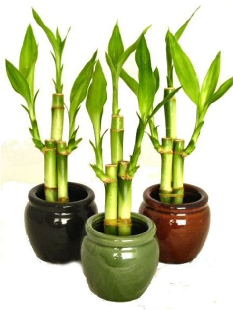 office plant decoration kl lucky plants for office feng shui plants for office desk