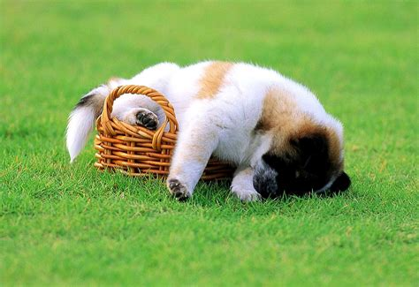 puppies in 34 puppies who can sleep absolutely anywhere