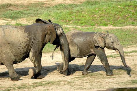 Elephant Matting by December 2011 Animalwise