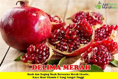 Bibit Buah Delima Merah bibit delima merah 70cm jualbenihmurah