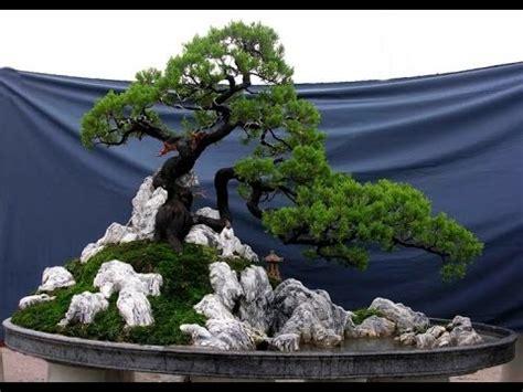 vietnamese bonsai landscapes tieu canh youtube