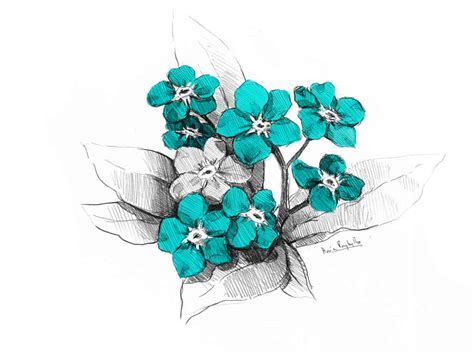 forget me not flower tattoo forget me not flower drawing at getdrawings free for
