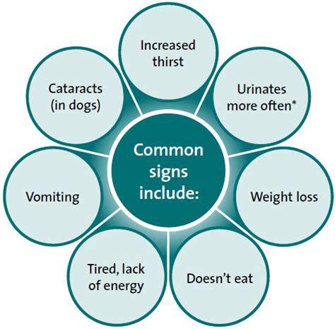 signs of diabetes in dogs diseases diabetes mellitus hill s pet