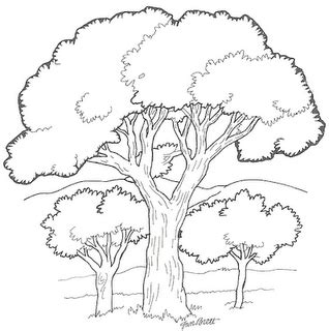 Espa 199 O Educar Desenhos De 225 Rvores Para Colorir Pintar O Tree Coloring Page