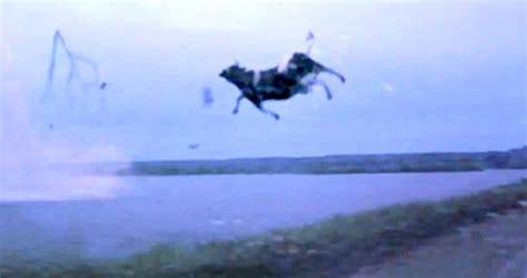mucca volante leno tromba d alla cascina bellomi gli animali