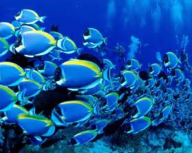 Text intellection beautiful fish under sea