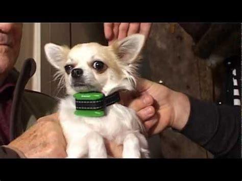 stop'n'dog anti aboiement à spray petits chiens fr youtube