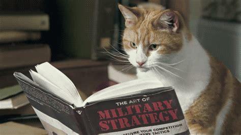 Cat Meme Gif - sun tzu gifs find share on giphy