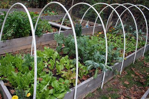 skippys vegetable garden amazing skippys vegetable garden skippys vegetable garden