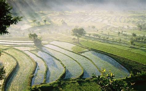 3d Wallpaper 50924881 Terrace Rice Fields Bali bali rice fields wallpapers bali rice fields stock photos