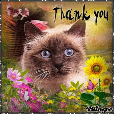 Thanks Aunties We Are The Cat In The Flickr by The Pledge Drive Is Thank You Thank You Thank You