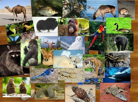 Where All The Animals by All Animals In The World Pictures Www Pixshark