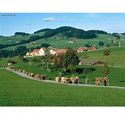 Nature Appenzell Switzerland Picture Nr 18950