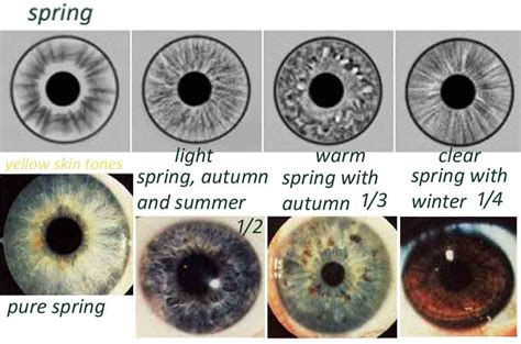 different types of eye colors eye types iridology expressing your
