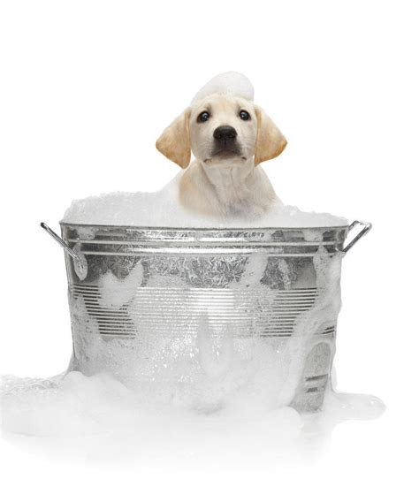 what is dogs in a bathtub mean bathe dog pet health cats dogs rabbits and everything