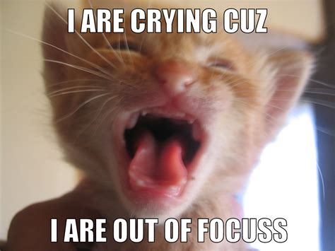 Crying Dog Meme - lolcat wikipedia