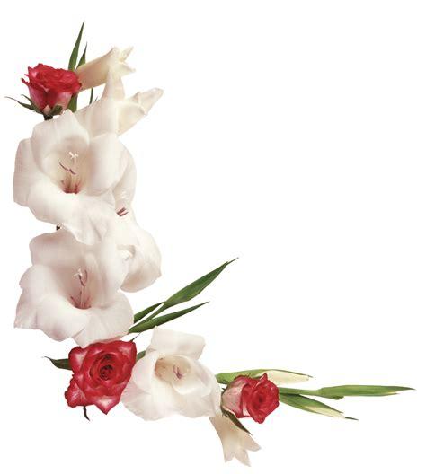 imagenes en png de rosas marcos gratis para fotos flores png ramos etc renders