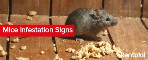 Rat Infestation Kitchen by Rat Infestation Solution Driverlayer Search Engine
