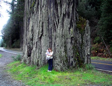 Style Of Homes by Avenue Of The Giants With Holly Flickr Photo Sharing