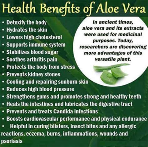 Aloe Vera Facts by Pics Photos Aloe Vera Facts